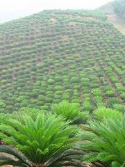 Foshan Greenworld Nursery Co Ltd From China Company B2bmit