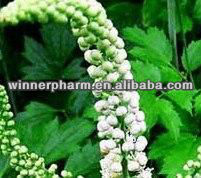 Top Quality 2.5% Triterpene glycosides Black Cohosh Extract