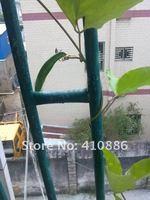 Карликовое дерево San 20 1 , 100% ,