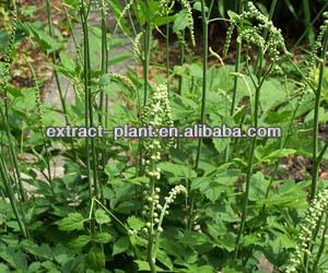 Cimicifuga racemosa/ Black Cohosh P.E