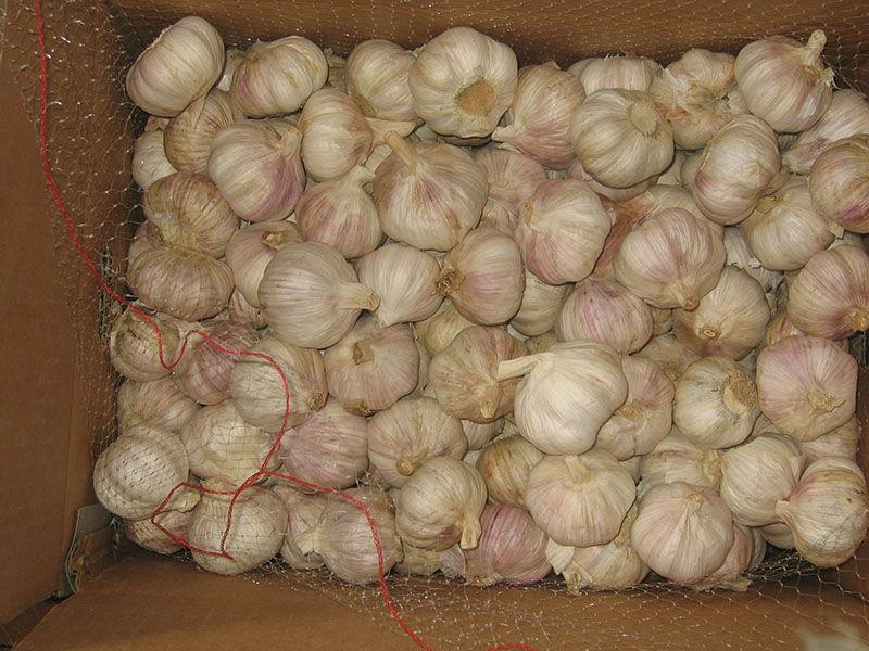 natural garlic, white fresh garlic, pure white garlic