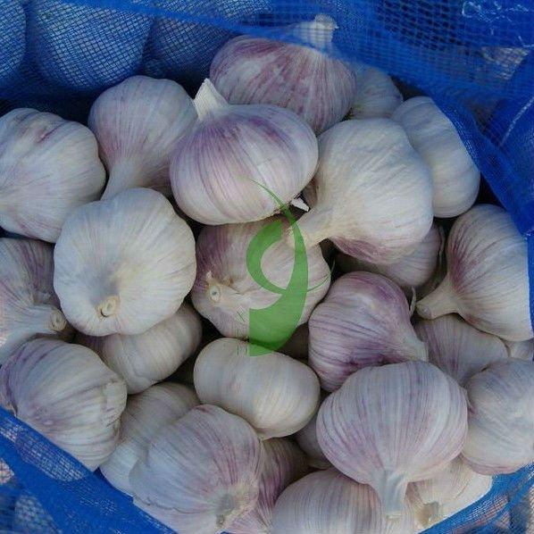 New Corp Grade A wholesale exporting society garlic plants and natural garlic