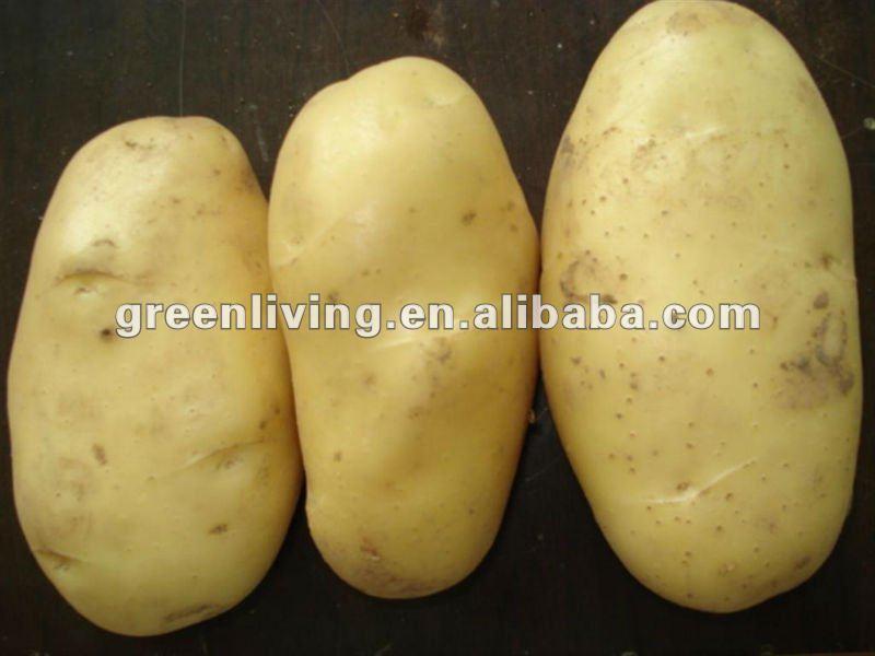 chinese fresh potato 100-250g