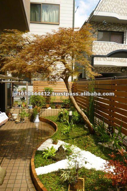 Zen Garden Plants Plant For Zen Garden