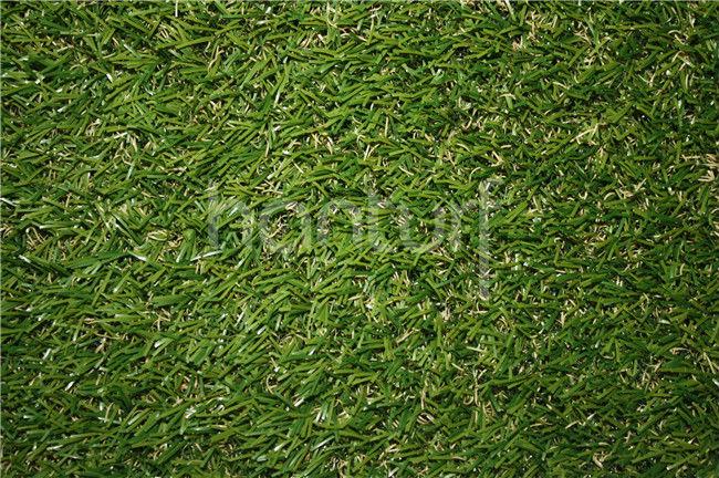 3 G India PE hierba falsa