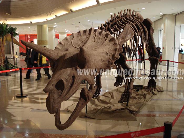 Triceratops-Skeleton-1.jpg