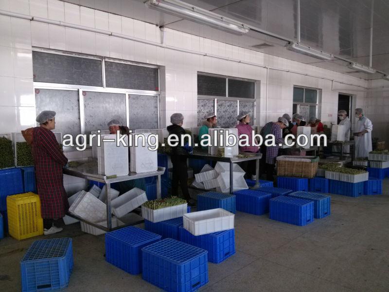 Shandong frozen green asparagus products,China 2013 New crop Shandong ...