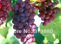 Карликовое дерево 25 pcs pink grapes 25pcs gold finger grapes 25pcs black grapes 25 pcs green grapes fruit seeds