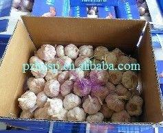 Natural Garlic 2013