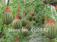 30 штук арбуз семена семена дыни воды diy дома graden, красный