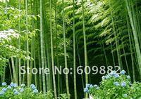 Карликовое дерево 30 DIY