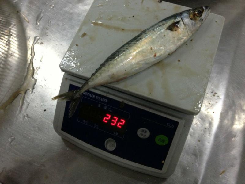 frozen whole round mackerel fish 8-10pcs/kgs seafood export