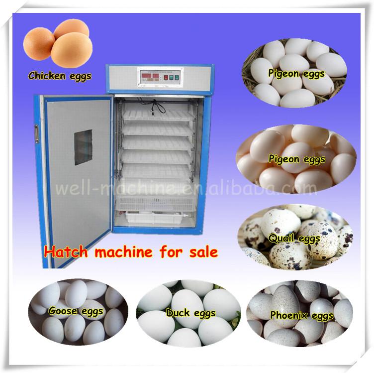 Parrot Egg Incubators For Sale