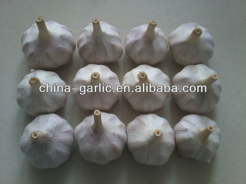 100% Natural Garlic for Sales