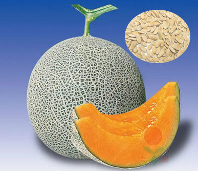 Sweetest Hami Melon Seeds--For Growing