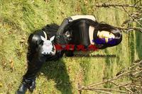 моли маска] Натори Натори японских прямых Фотогеничная маска Азии 1
