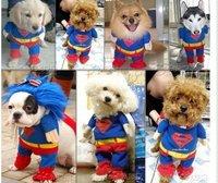 Собака Одежда