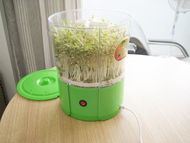 mung bean sprouter