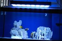 Светодиодная лампа для растений led 100% KF-AQ012
