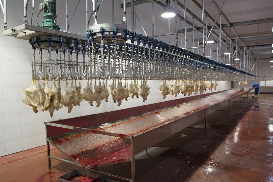 good poultry slaughterhouse equipment /abattoir equipment long lifetime