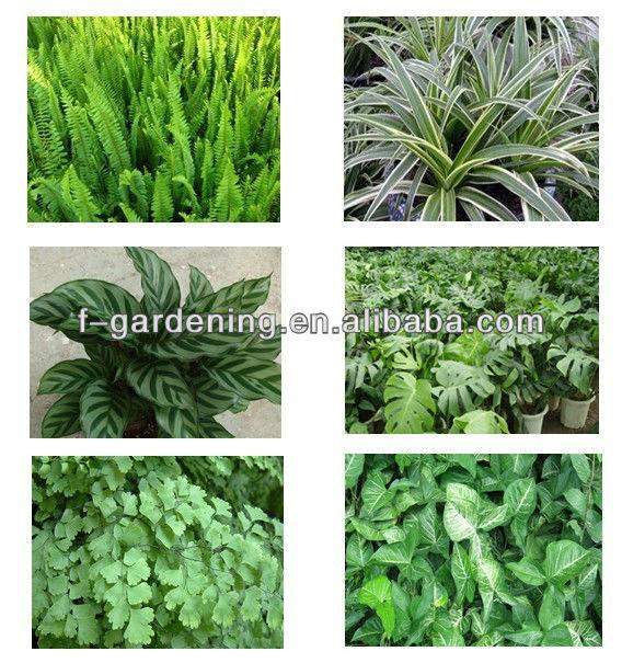 Green Vertical Wall Garden Planters