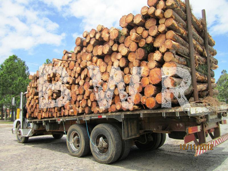 Yellow Pine Logs 3  - BWR - small