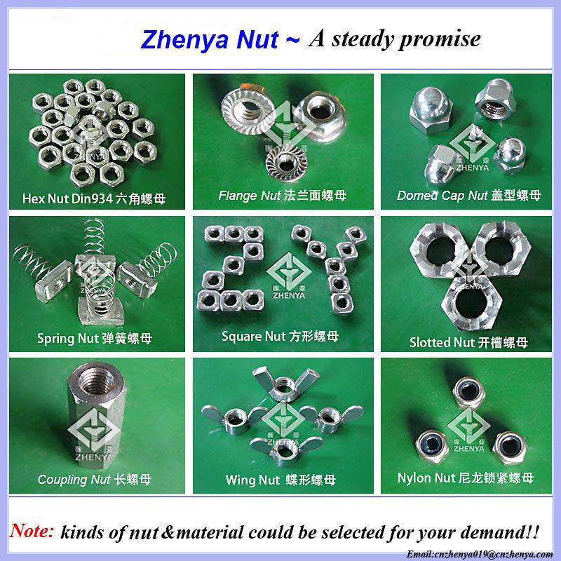 Nut-zhenya-800-0001
