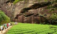 New! 8pcs Organic 4pcs WuYi Rock Tea,DaHongPao(Big Red Robe)+4pcs Black Tea(Lapsang Souchong),Oolong Tea,Free Shipping