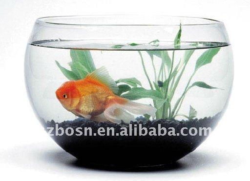 Wall Mounted Acrylic Fish Tank Acrylic Fish Aquarium