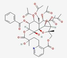 98% wilfordine for anti-rheumatism ,tripterygium glycosides Alkaloids