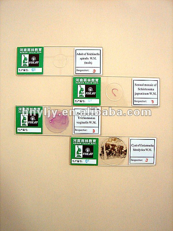 Adrenal gland sec./histology prepared microscope slides/histology prepared slides