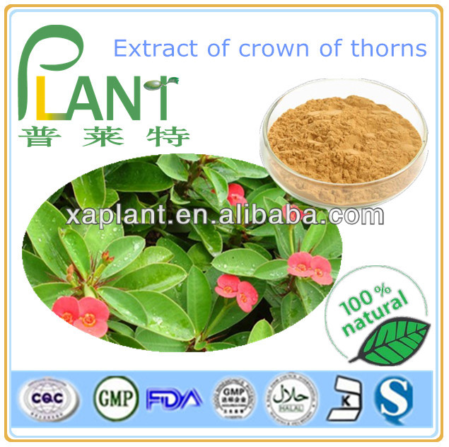Extract of crown of thorns powder