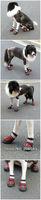Ошейники и Поводки для собак MOQ: 1 set, waterproof high quality sports dog boot, dog shoes