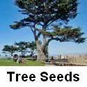 Карликовое дерево 156 , sd0499/0137