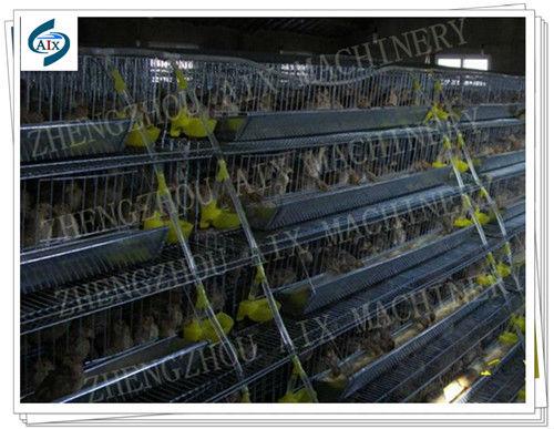 quail farming equipmen...