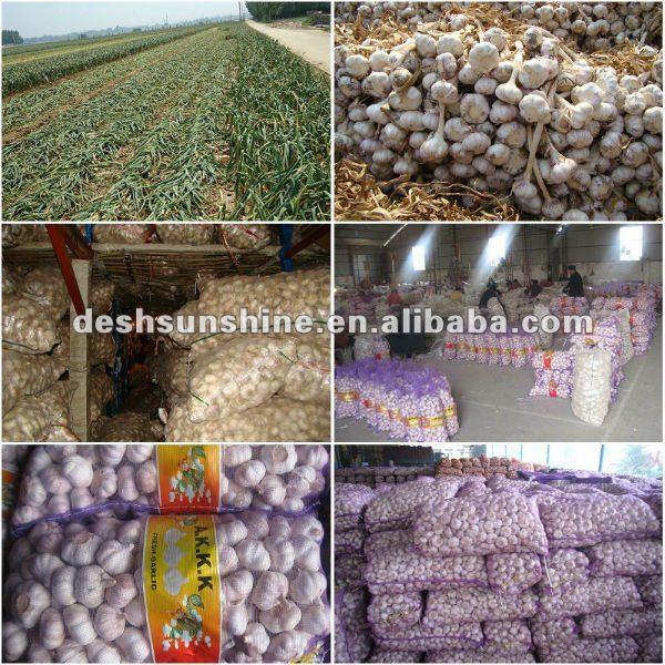 2013 good farmer garlic, best price for 5.0 natural garlic