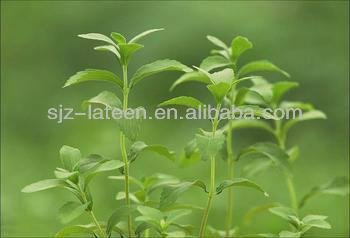 high quality Stevia