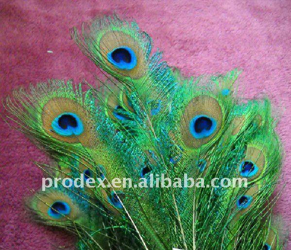 目玉の装飾のためのクジャクの羽問屋・仕入れ・卸・卸売り