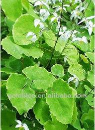 GMP & HACCP 100% Natural Organic Epimedium Herb P.E.