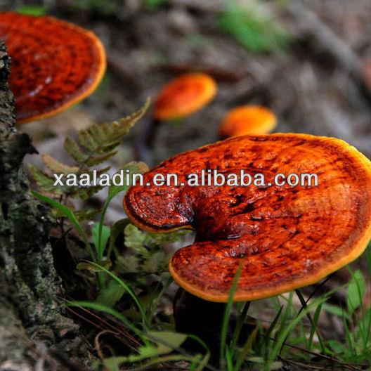 Ganoderma japonicum extract /P.Eof Triterpene