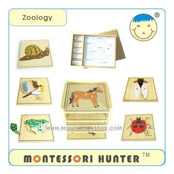 7.Zoology