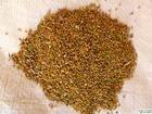 Dodder extrato de semente de Cuscuta chinensis pe campesterol