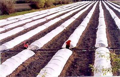 PE plastic film for Tunnel Greenhouse,Agriculture, Horticulture use.