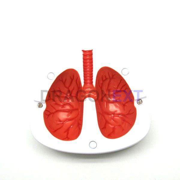 La cura ultima per fumo
