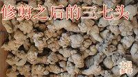 Сушеные фрукты Panax powder panax notoginseng 500g
