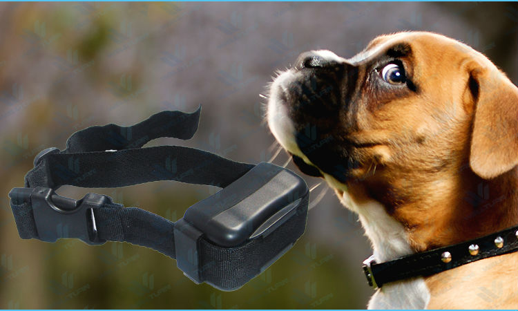 Adjustable automatic dog shock collar
