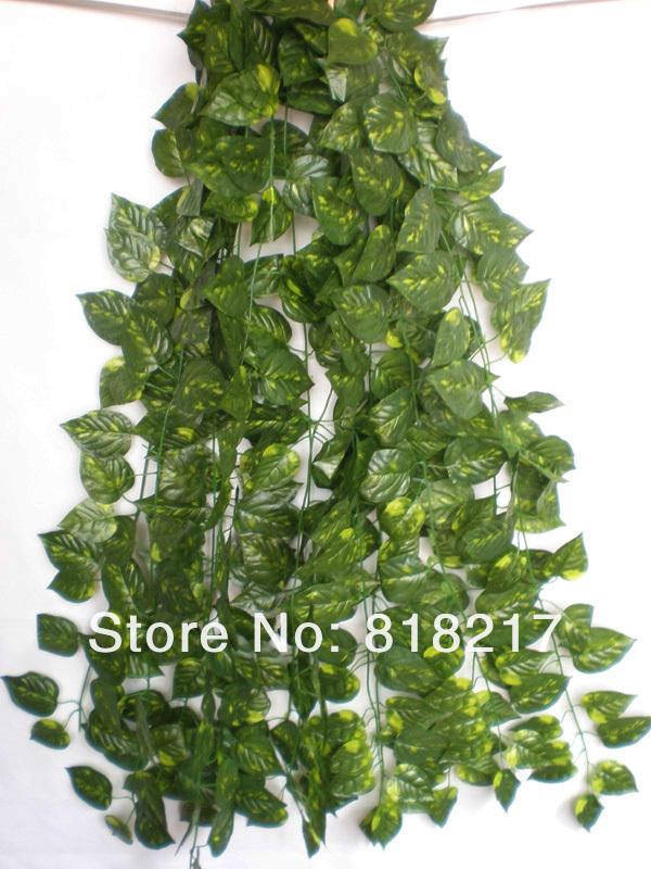 jardins plantas rasteiras:Hanging Ivy Plant in House