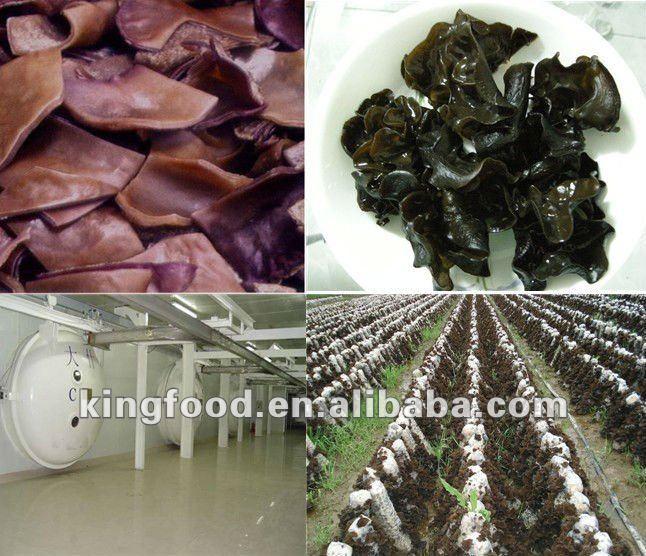IQF Frozen black fungus cut