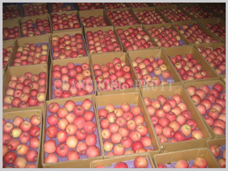 wholesale prices Apple fruit in China