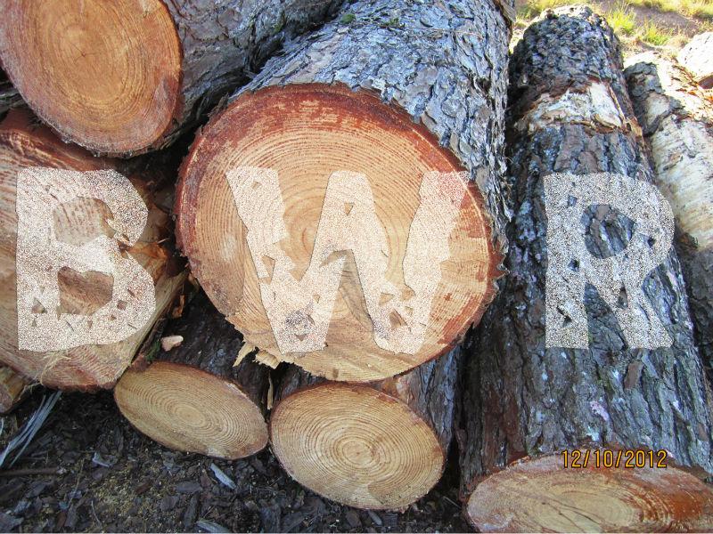 Yellow Pine Logs 5  - BWR - small